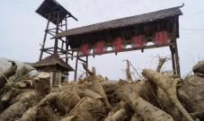国家农业产业强镇项目落地卸甲坪 奖补1000万