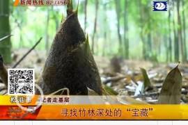 """松滋万家乡新铺子村村民 寻找竹林""""宝藏"""""""